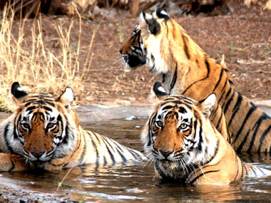 Kanha National Park Tour and Travel guide
