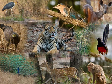 bandhavgarh national park tour and travel guide